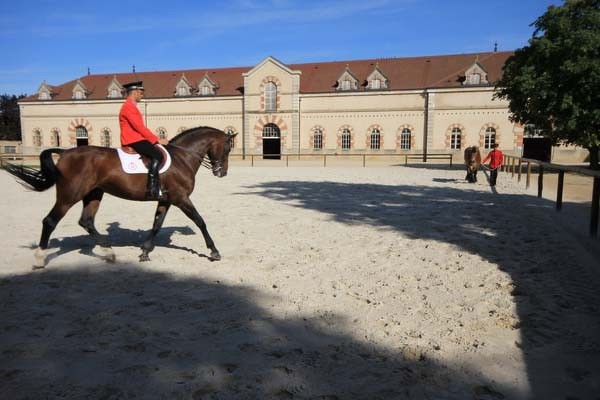 haras-national-de-cluny-jc-ballot